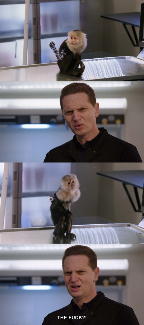 Silicon Valley - That's one NASTY little monkey!